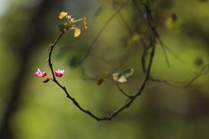 مناظر زیبا از مرکز قلب و عروق شهید رجایی: عکس شماره 1 / 12