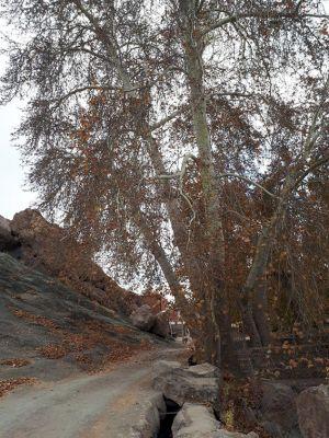 سفر تیم طبیعت گردی مرکز به کاشان ، روستای ابیانه و منظقه کویری: عکس شماره 8 / 12
