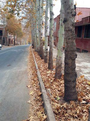 سفر تیم طبیعت گردی مرکز به کاشان ، روستای ابیانه و منظقه کویری: عکس شماره 9 / 12